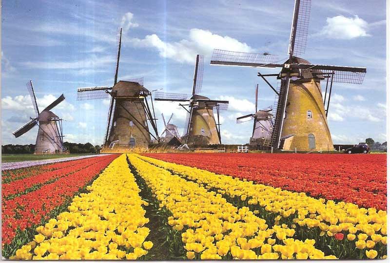 Pendaftaran Beasiswa S1 S2 Orange Tulip Sudah Dibuka Untuk Yang Mau Kuliah Gratis ke Belanda